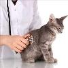 Ветеринарные клиники в Ворге